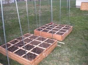 Ready to Plant