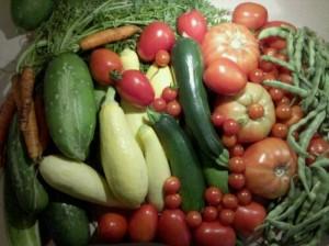 Harvest 8/6/2010