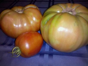 Monster tomatoes